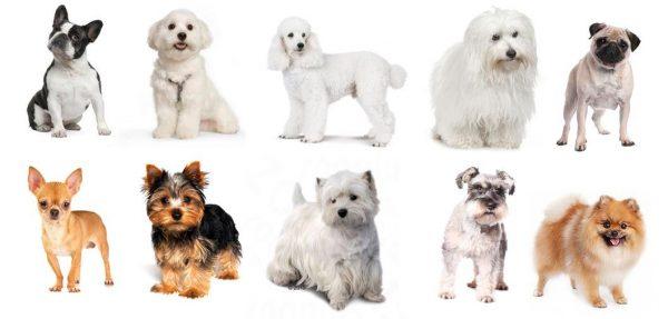 perros pequeños para niños